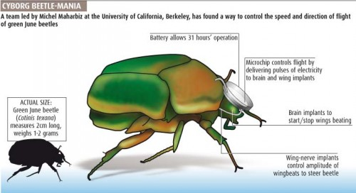 Scientists now can control Insect Movement!