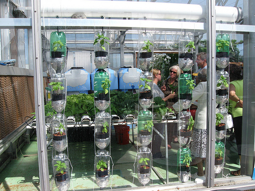Apartment garden diy how to make a window farm for Apartment greenhouse kits